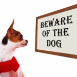 beware of dog by Stuart Miles
